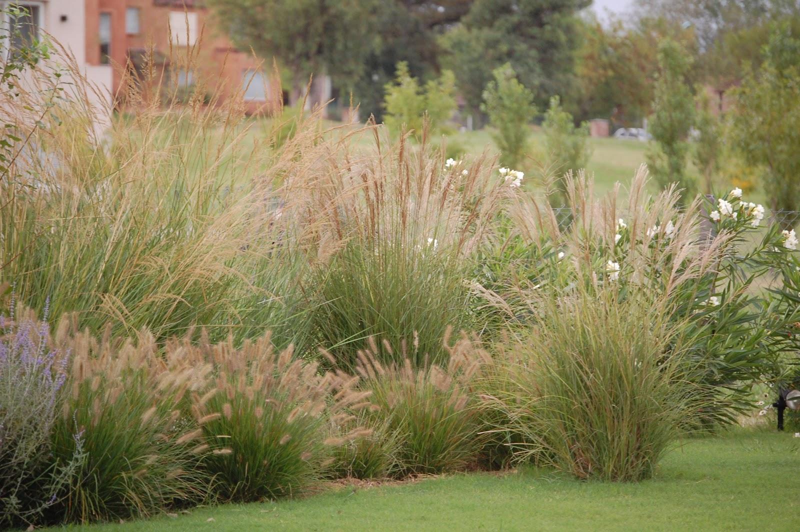 Las plantas de tu jardín  elenconclub